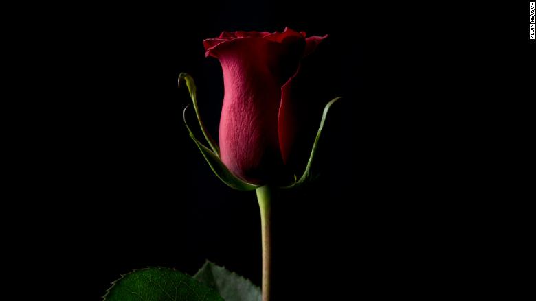 """""""Forever Rose"""" by Kevin Abosch"""